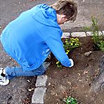 Baumscheiben-Bepflanzung